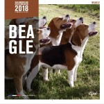 Calendrier 2018 Beagles Affixe Edition