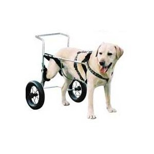 Canis Mobile Chien