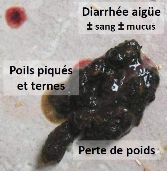 Lhuile des graines de courge aux helminthes