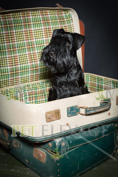 photographie du championnat de france angers samedi 7 juin 2014. Black Bedroom Furniture Sets. Home Design Ideas