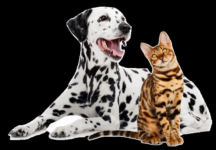 reglementation concernant les chiens