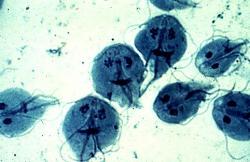 Les parasites du chien - desperados.hu
