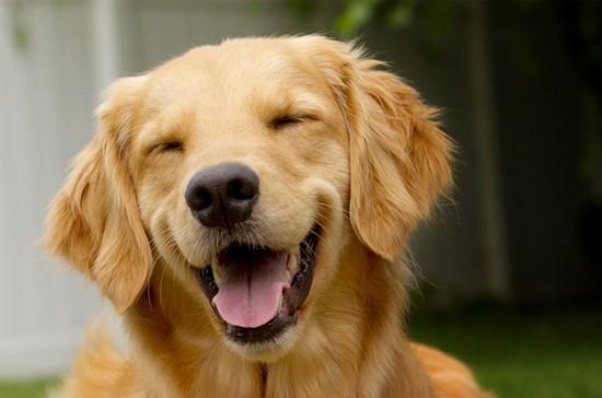 etes vous s r que votre chien est heureux. Black Bedroom Furniture Sets. Home Design Ideas